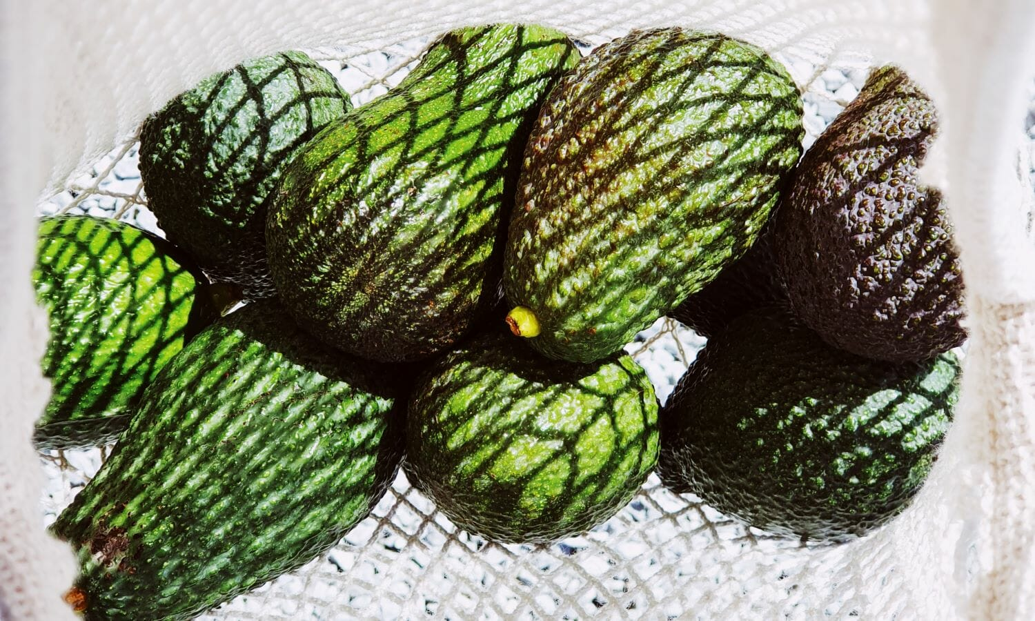 An avocado recipe for healthy skin